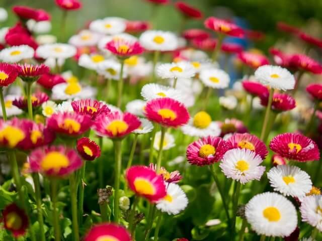 Myydään Kukkakauppa